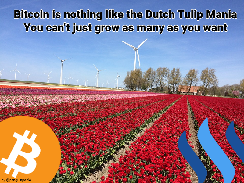 Tulip Mania in Portsmouth